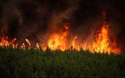 ВНИМАНИЕ: Повишена опасност от възникване на горски пожари!