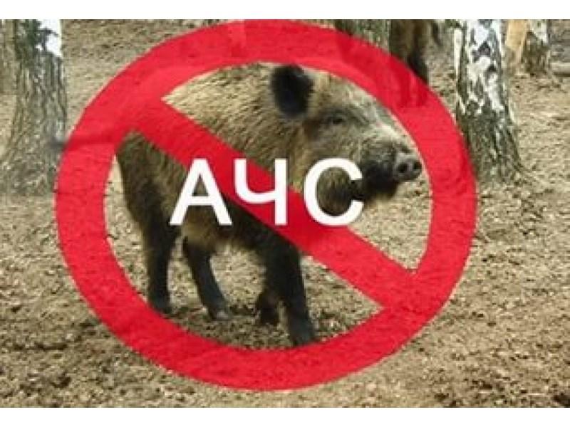 Общинска епизоотична комисия одобри мерки срещу разпространението на болестта Африканска чума по свинете на територията на община Ивайловград