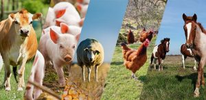 Съобщение за реда на регистрация на животновъден обект – лично стопанство