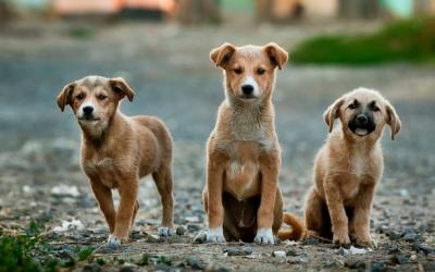 Община Ивайловград стартира дейностите по залавяне и кастрация на безстопанствени кучета